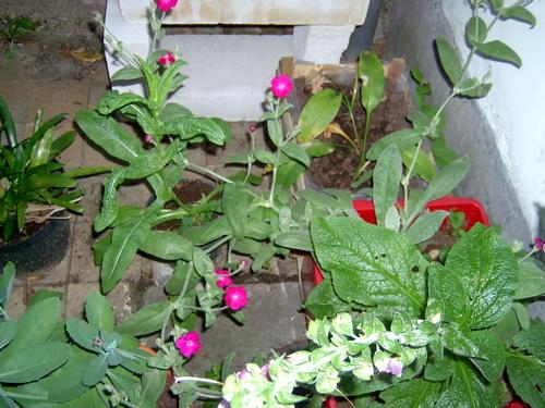 2005-06-22 PrikneusInBloom
