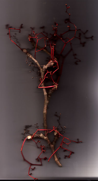 2006-11-24 00h13 dry vine