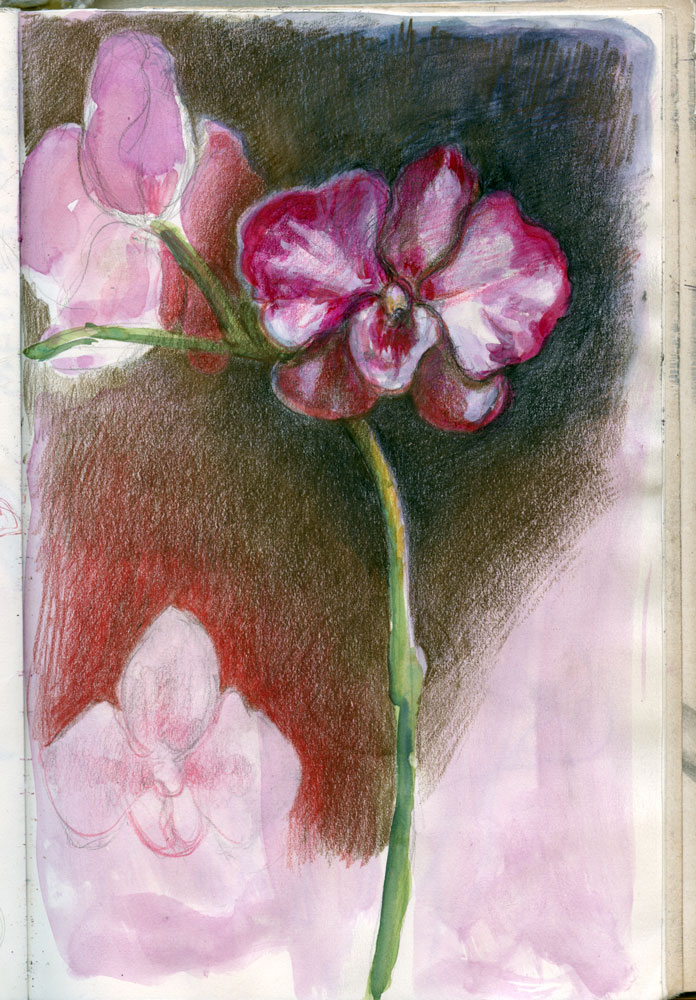 Book44 orchid