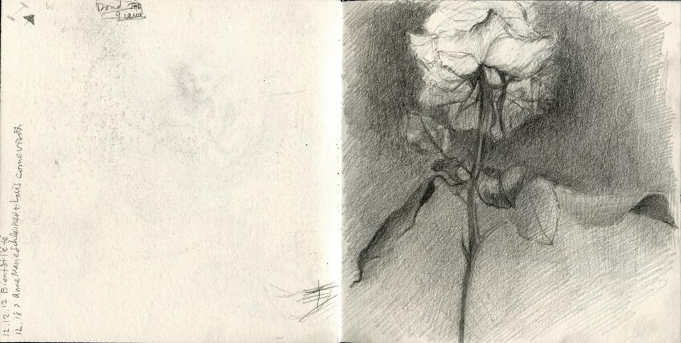 Book45 rose
