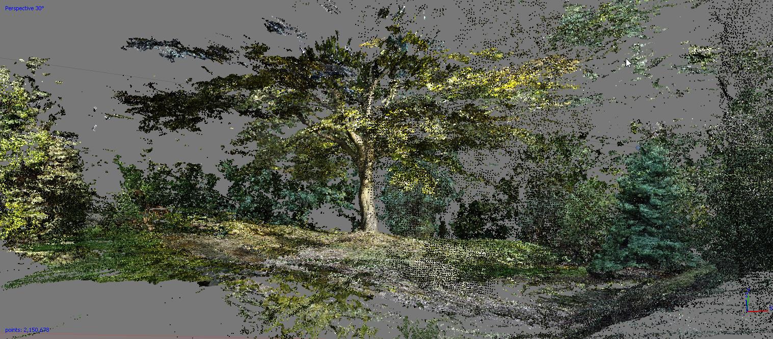 Kantor-tree