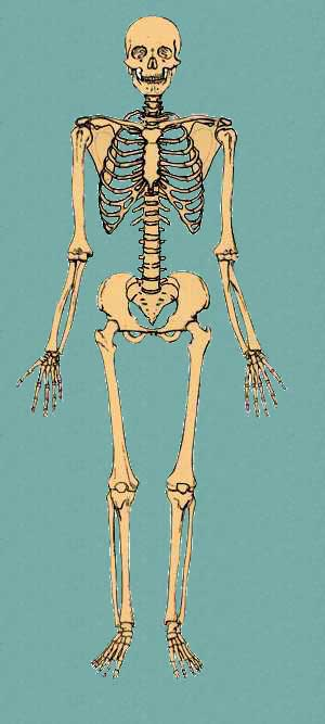 Standard Anatomical Position Bone Broke